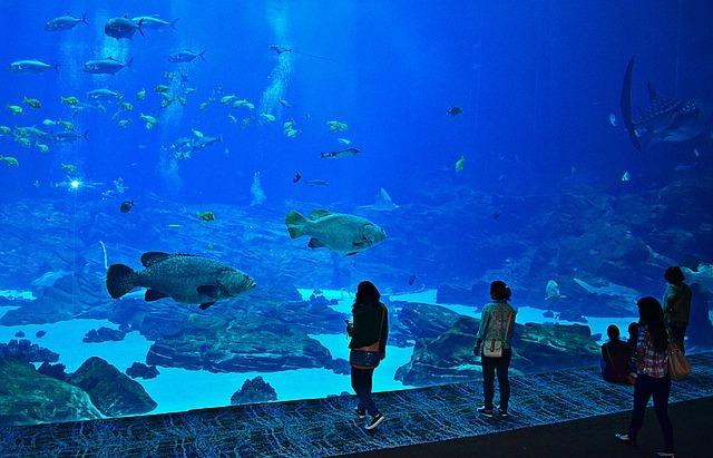 Staffing Atlanta Aquarium